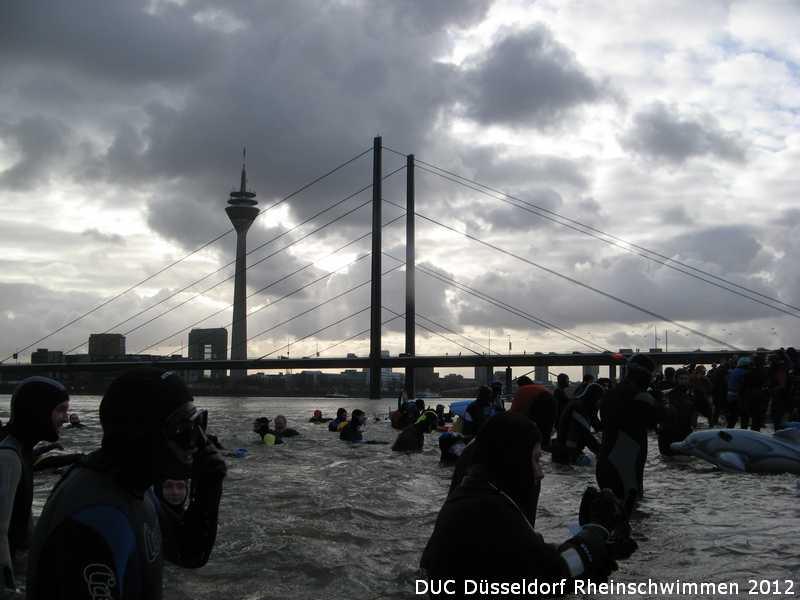 duc_rheinschwimmen_2012_25