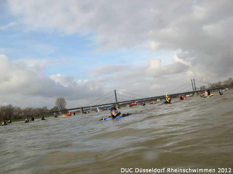 duc_rheinschwimmen_2012_41